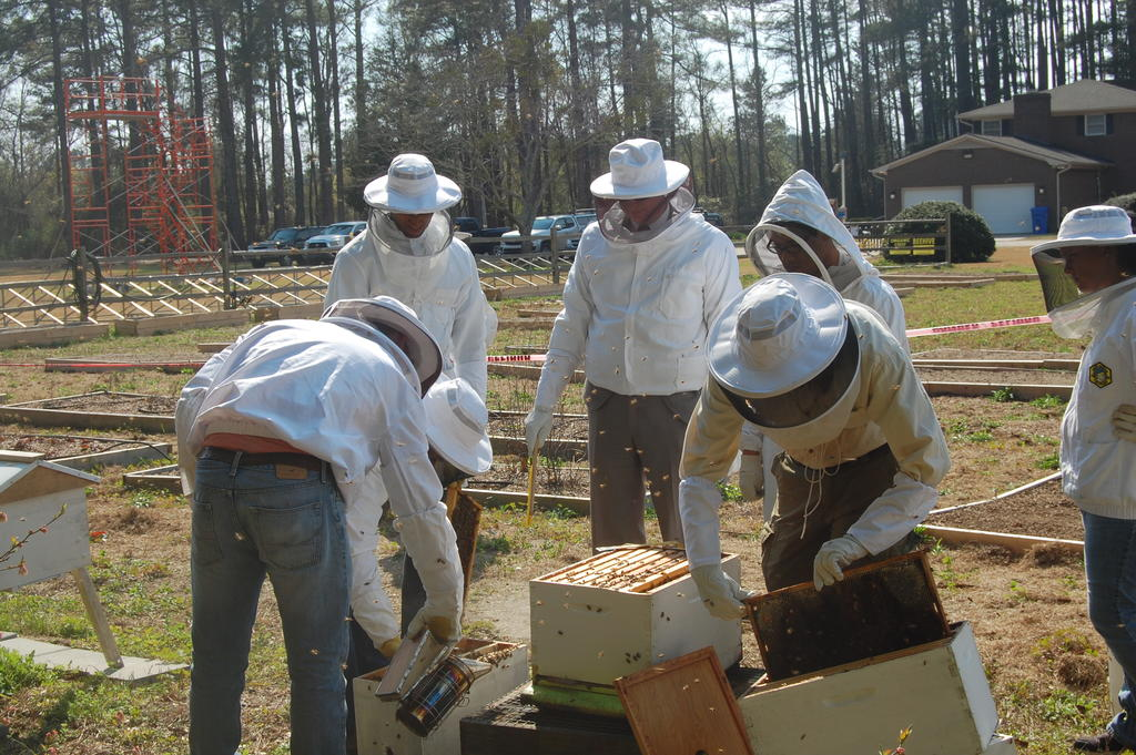 The campus apiary has several beehives