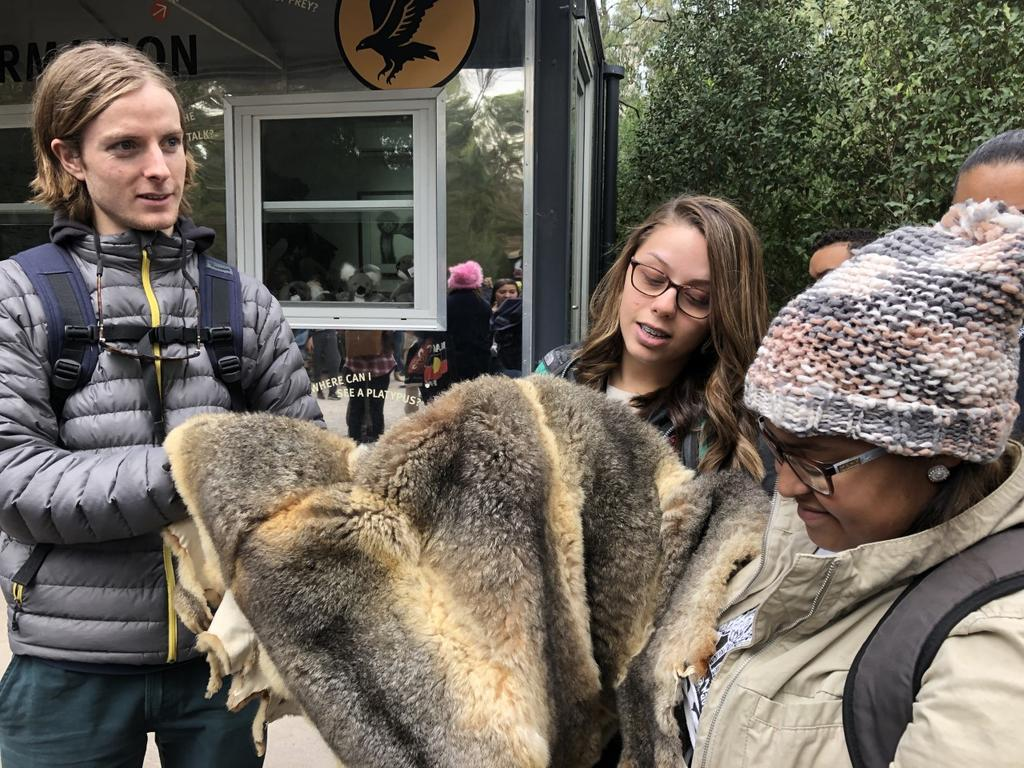 Swinburne student Matteo Meirelles, and UNCP students Caylee Holden and Chandra Jacobs at the Healesville Sanctuary admiring a lush Australian possum pelt, used traditionally and today by Aboriginal people to make cloaks.