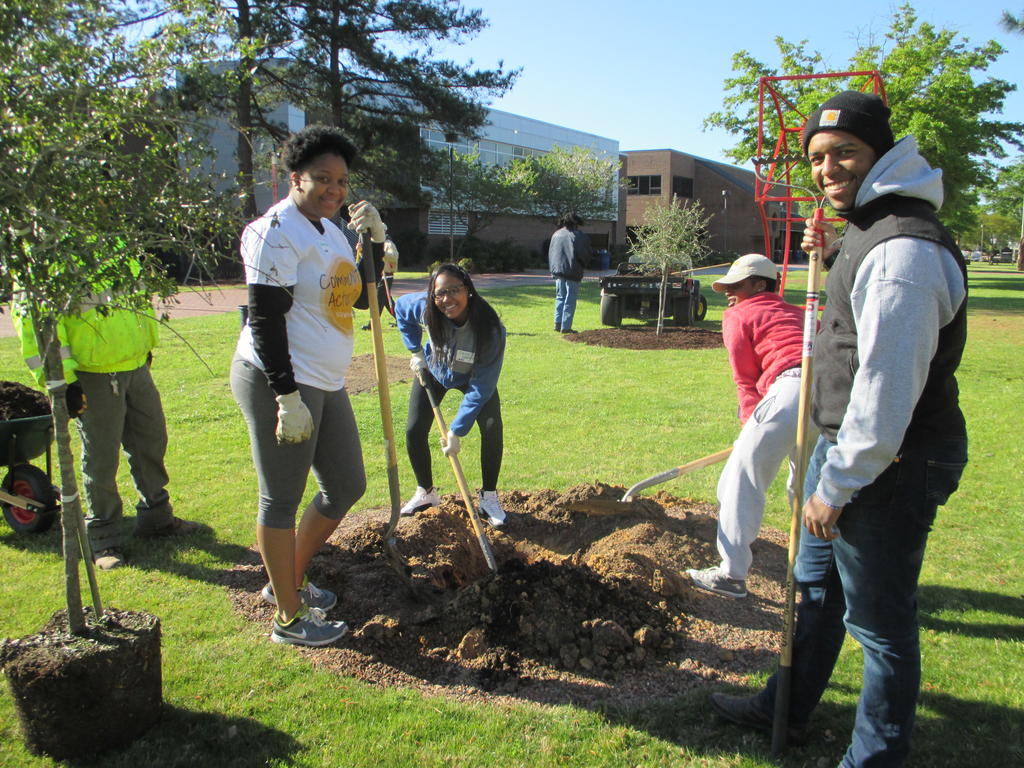 Planting tree in UC Lawn