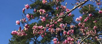 Spring blooms on trees.