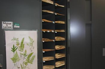 Another view inside the Herbarium.